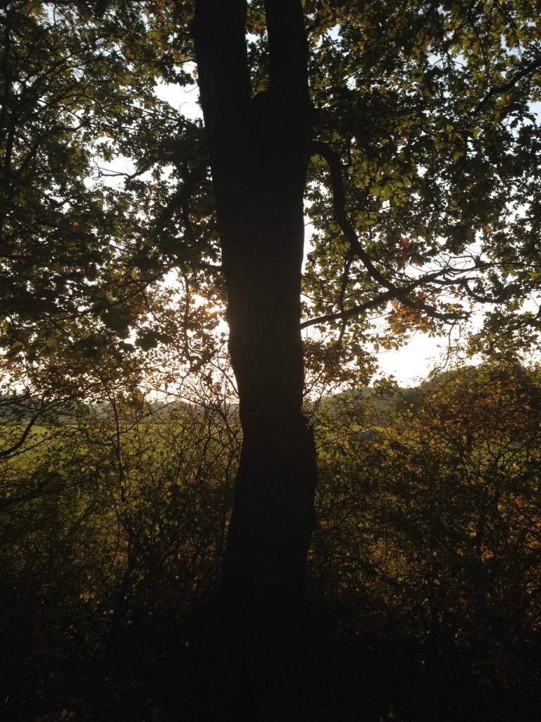 Ankerbaum